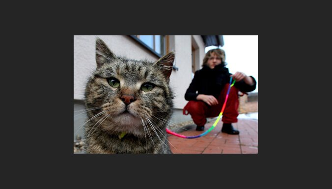 Кот, который не гуляет сам по себе
