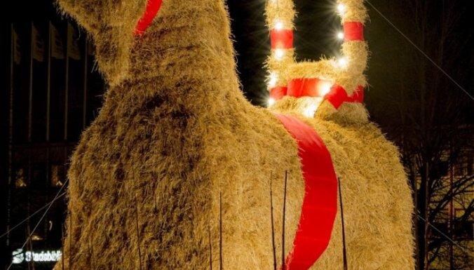 Slavenajam zviedru Ziemassvētku āzim izdevies izdzīvot