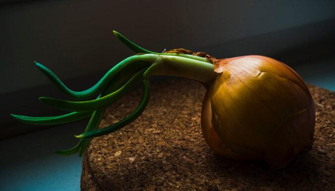 Kad un kāpēc stādīt maģiskos sīpolus?