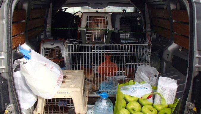 PVD: растет импорт животных через границу, их везут в плохих условиях