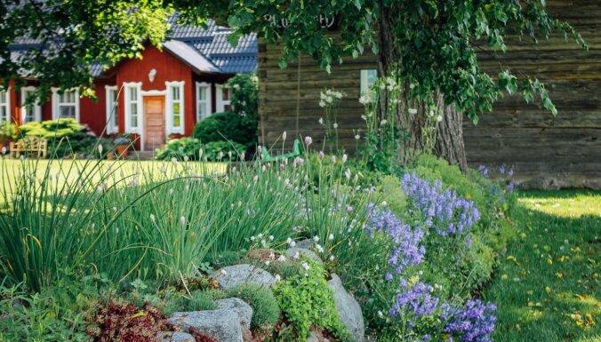 Foto: Iespaidīgais angļu stila daiļdārzs Igaunijā, kurā vijas krāšņas ziedu upes