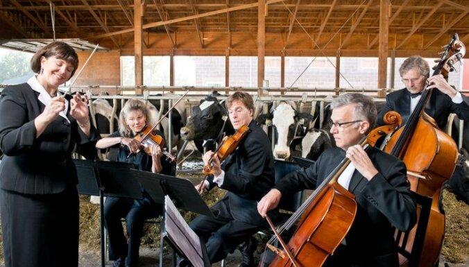 Govis dod vairāk piena, kad klausās 'REM' mūziku