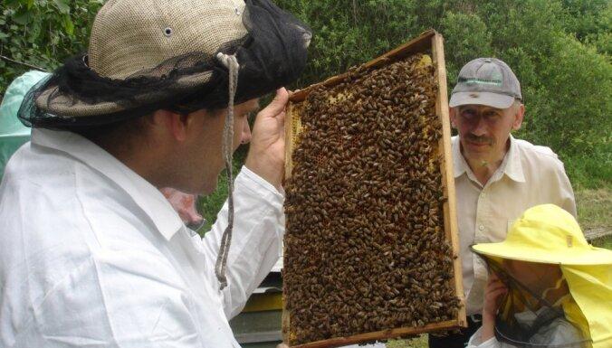 Saldus novads - medus piliens Kurzemē
