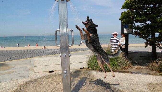 В Австралии установилась экстремальная жара