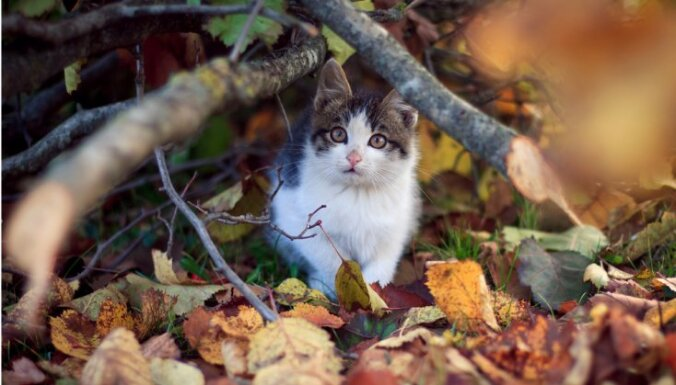 Ugunsdzēsēji palīdz sievietei noņemt gredzenu un glābj iesprūdušus kaķus