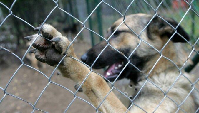Жестокость: живодеры привязали к дереву беременную собаку