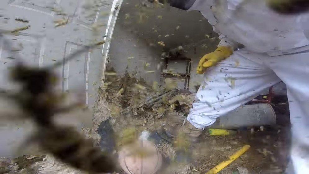 """ВИДЕО из твоего кошмара. На GoPro снято уничтожение """"дедушки"""" всех осиных гнезд"""