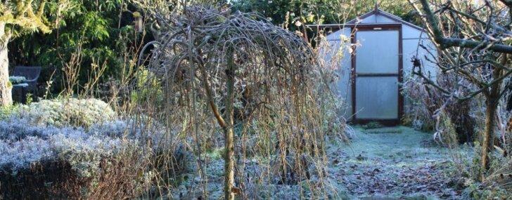 Dārza bieds – kailsals. Kā pasargāt augus salā bez sniega