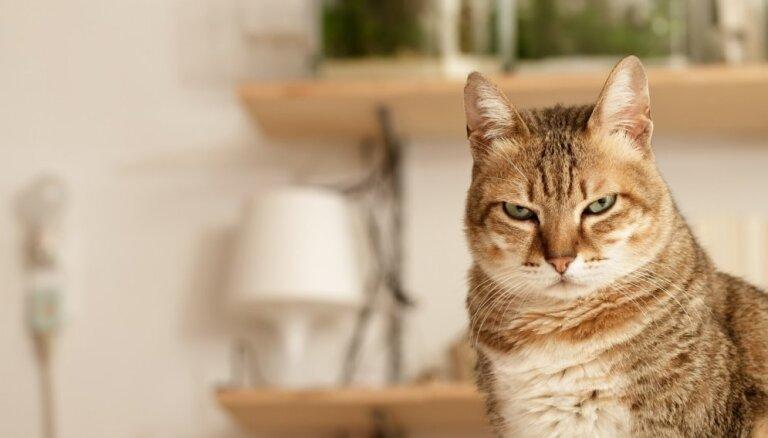 Кошки откликаются на свое имя исключительно ради выгоды