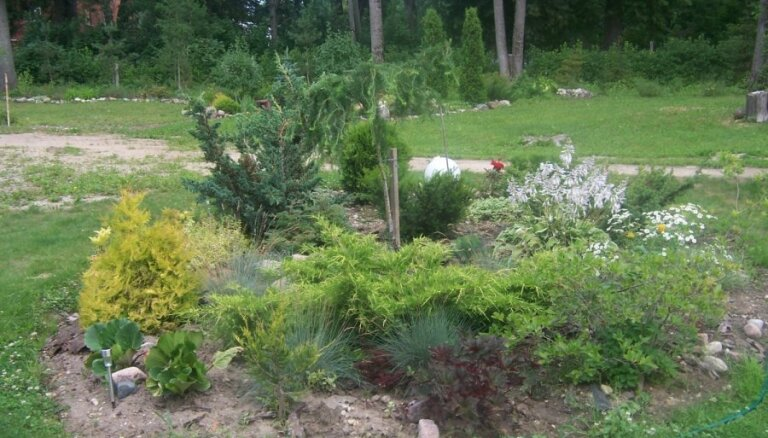 'Re, kā zied!': Gundas iekoptais dārzs