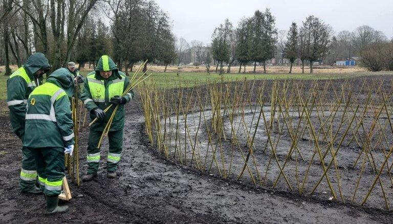 Nordeķu parkā Pārdaugavā izveidots dzīvžoga labirints