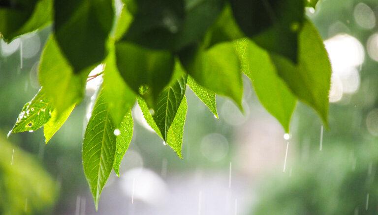 В Риге разработают и опробуют новую систему очистки дождевой воды