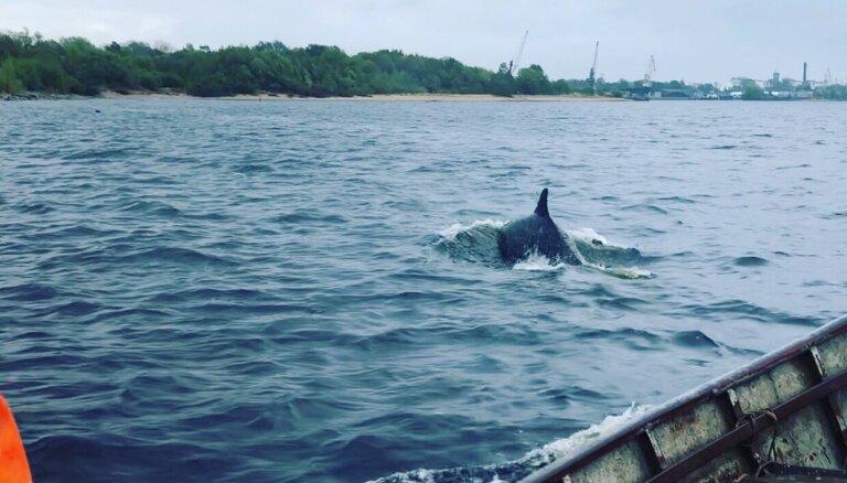 На Мангальсале снова замечен дельфин; по мнению эксперта, это необычно