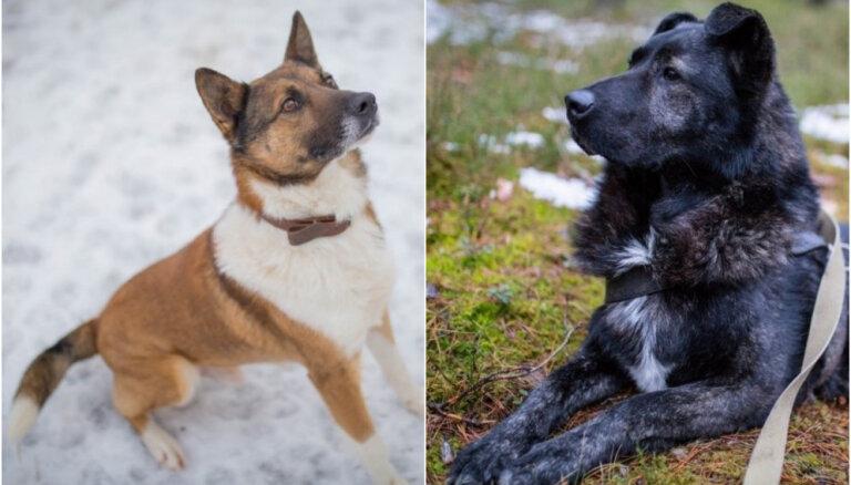 Divi suņuki ilgojas pēc mīlošiem saimniekiem