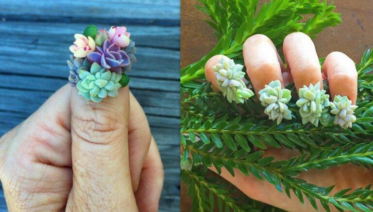 Nagi kā botāniskais dārzs – aktualitāte, kas iemantojusi skaistuma dīvu uzmanību