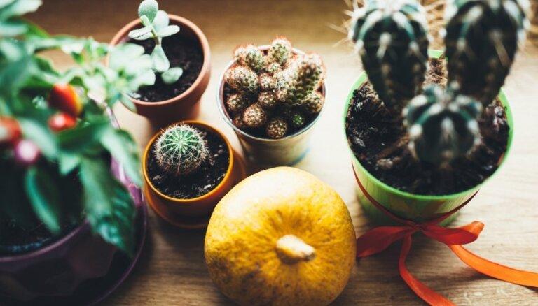 5 интересных вещей, которые вы не знали о кактусах