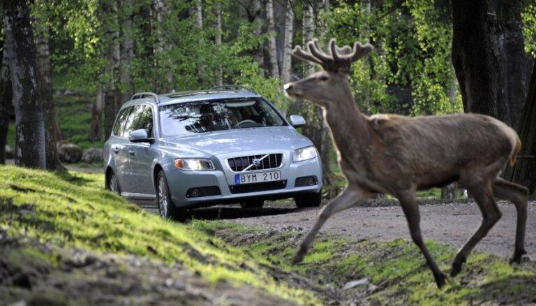 LAMB aicina OCTA kompensācijā iekļaut arī sadursmes ar meža zvēriem