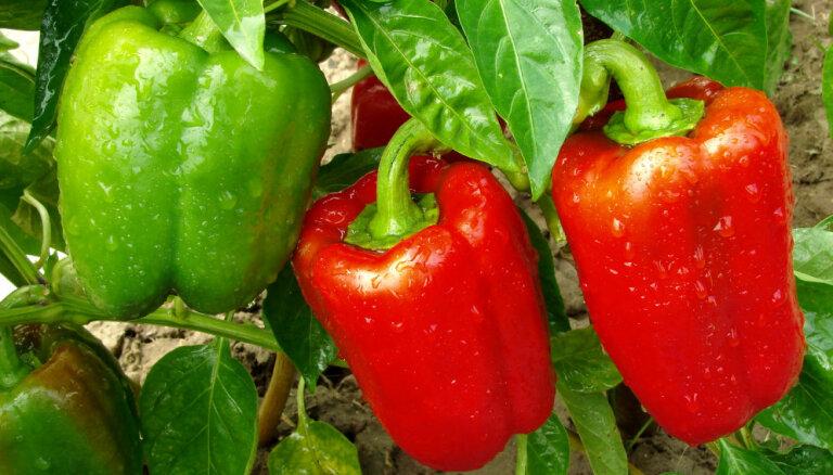 Augļi un dārzeņi, kas bagāti ar A vitamīnu