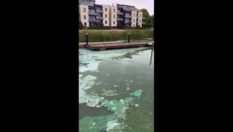 Video: Lielupē pie 'Akvaparka' konstatētas zilaļģes