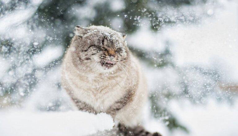 Sestdien snigs un pūtīs mēreni stiprs vējš