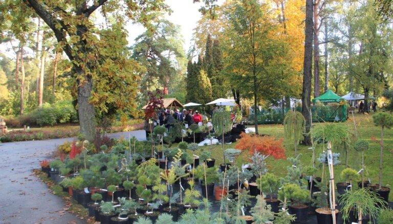 Bulduru Dārzkopības vidusskola 3. oktobrī aicina svinēt Rudens ražas svētkus