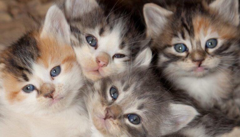Ugunsdzēsēji izglābuši akā iekritušu kaķu ģimeni