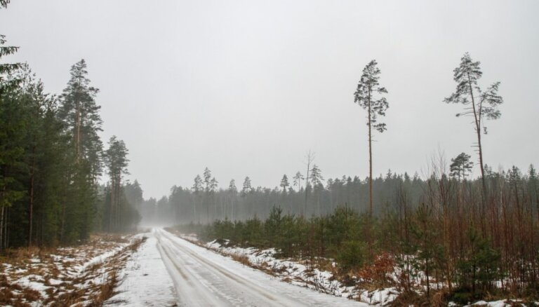 Pērn mežizstrādei labvēlīgo laikapstākļu dēļ varēja koncentrēties sliktu cirsmu izstrādei