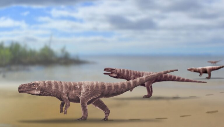 Pētījums izaicina priekšstatus par krokodilu priekštečiem – tie esot skrējuši kā strausi