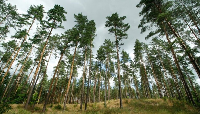 'Ikea' grupas uzņēmums iegādājies vienu no lielākajiem mežu īpašumiem Latvijā, LVM – bešā