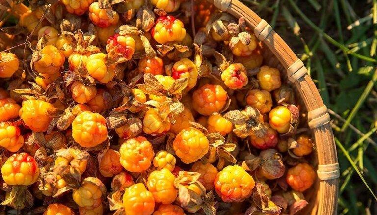 Финляндия запретила въезд сборщикам ягод с Украины