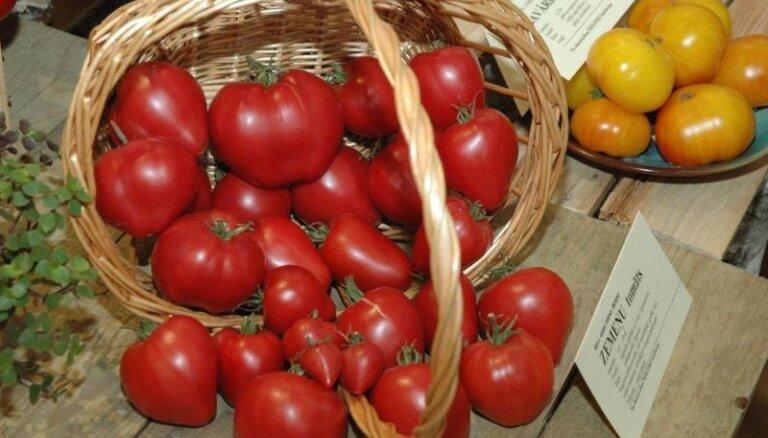 Dabas muzejā nākamnedēļ notiks tomātu un veselības augu parāde
