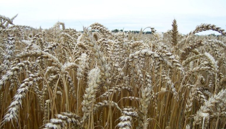 Pavļuts prognozē Latvijā ražotas pārtikas potenciālu; plāno atbalstīt vietējos lauksaimniekus