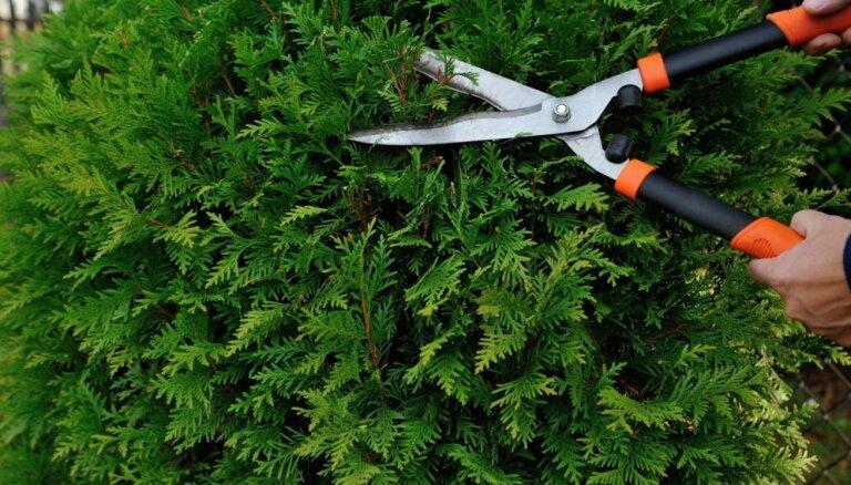Как правильно выбрать растения для живой изгороди