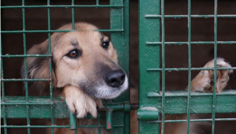 Uzsāk labdarības akciju dzīvnieku patversmju iemītnieku atbalstam