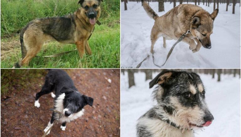 Draugs meklē mājas: četri suņuki alkst cilvēka mīlestības