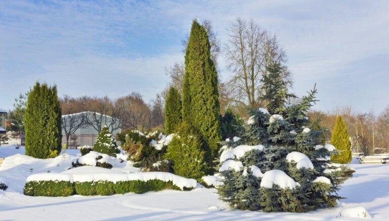 No segšanas līdz sala neizturīgākajiem augiem: pieci jautājumi dārza kopšanai ziemā