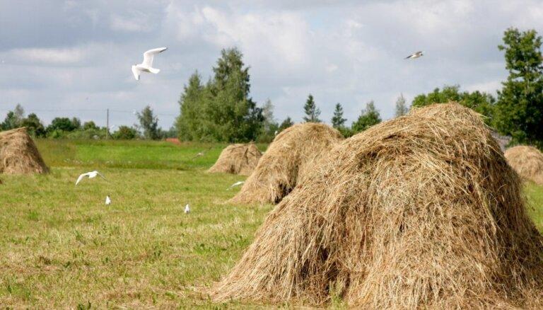 Sausums aizkavējis lopbarības sagādi; saimnieki cer uz rudeni un kukurūzu