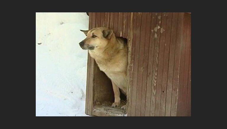 Vai Latvijā ir iespējams aizliegt suņus turēt pie ķēdes?