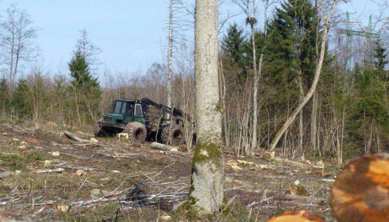 Ik gadu mežizstrādē tiek izpostīti aptuveni 10% mazo ērgļu ligzdu