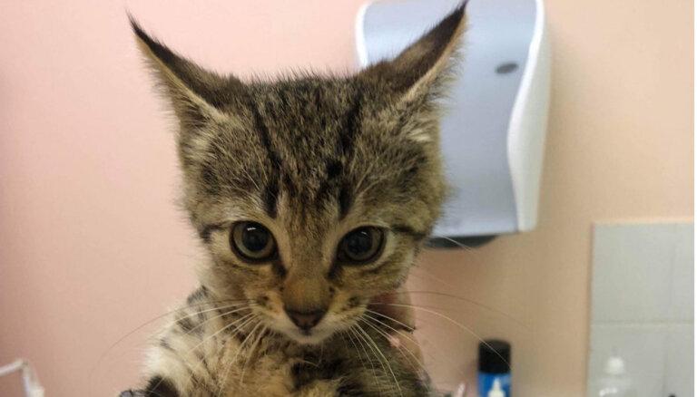 27 kaķēniem nepieciešams tavs atbalsts; biedrība lūdz finansiālu palīdzību