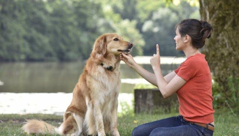 Ierastas saimnieku kļūdas, kuras tiek pieļautas suņu audzināšanā