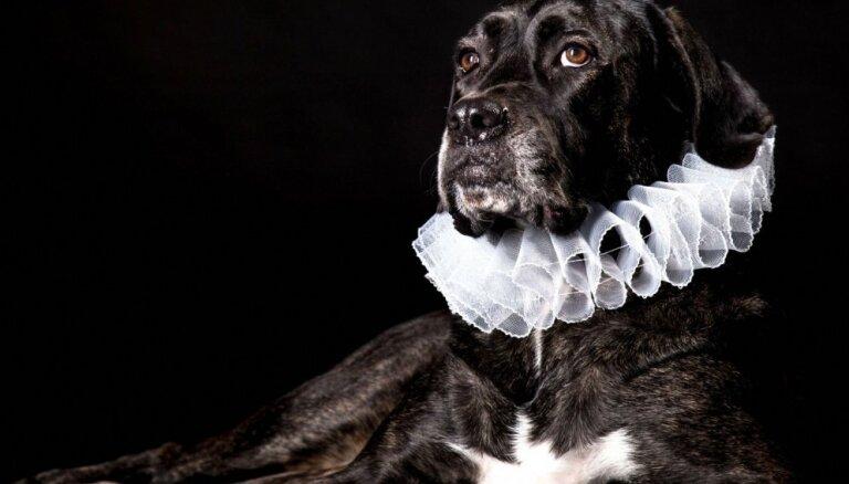 Foto projekts: Patversmes dzīvnieki uz vienu dienu pārtop par smalkiem aristokrātiem