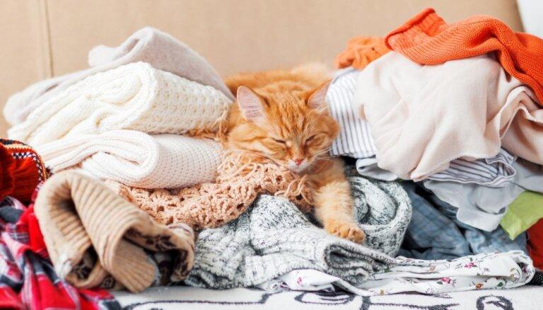 16 обязанностей уважающих себя котов, которые не всегда понятны людям