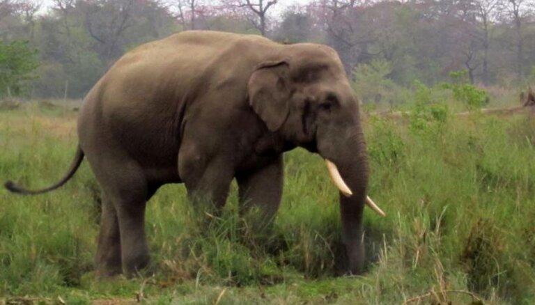 ВИДЕО: Слон затоптал насмерть неумелого гипнотизера