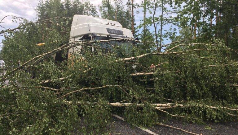 На Латвию надвигается буря: что делать, если упало дерево