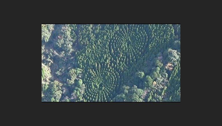ВИДЕО. Странные иероглифы посреди японского леса
