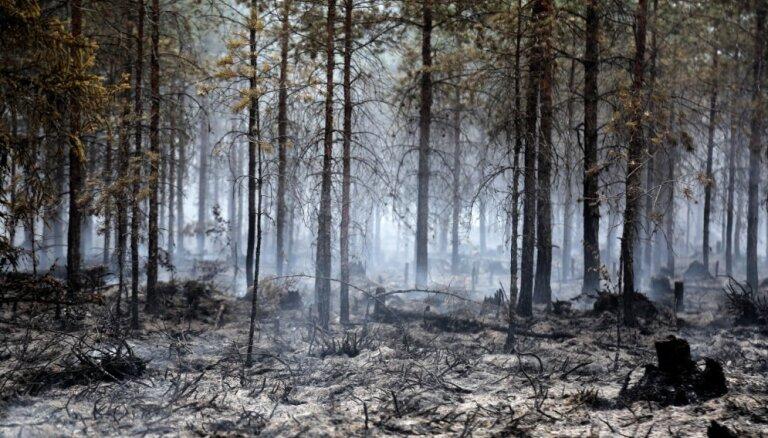 Pieaug dzēsto meža ugunsgrēku skaits un izdegušās platības