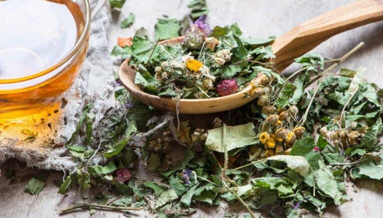 Augu tējas veselības stiprināšanai un sevis pasargāšanai no saaukstēšanās