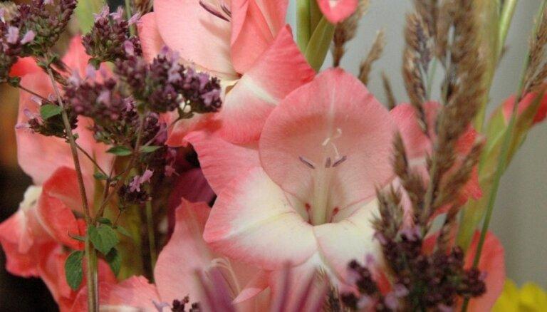 Būs skatāmas visas skaistākās gladiolu šķirnes vienuviet - izstādē Dabas muzejā