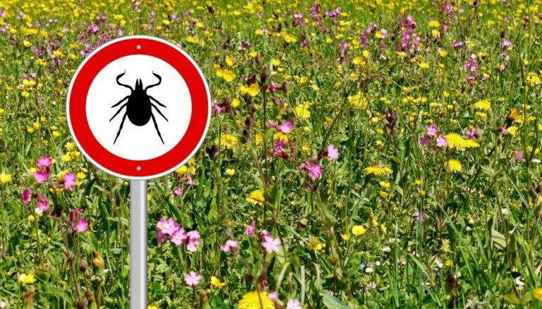 Латвийцы все более уязвимы для инфекций от клещей